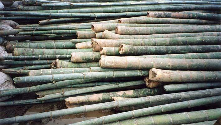 Naturbaustoff Bambus